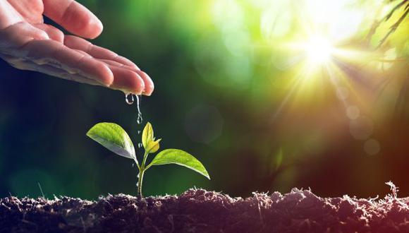 La expansión del PBI, la revaloración de los beneficios de la agricultura, un reenfoque de la organización industrial y contribuciones en la ciencia y la investigación son algunos de los aportes relevantes de la bioeconomía a la región. (Foto: iStock)