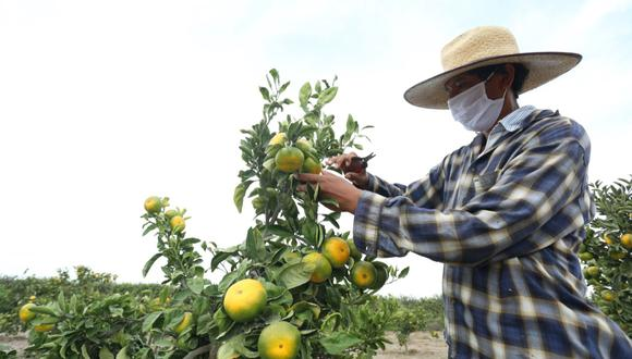 Uso de esta herramienta facilitará al pequeño agricultor la práctica de una mejor cultura de pago, señaló Agrobanco. (Foto: Difusión)