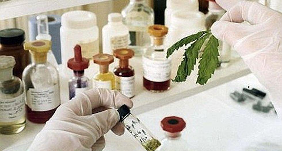 Cannabis: Ministerio del interior aprobó lineamientos de seguridad para uso medicinal y terapéutico