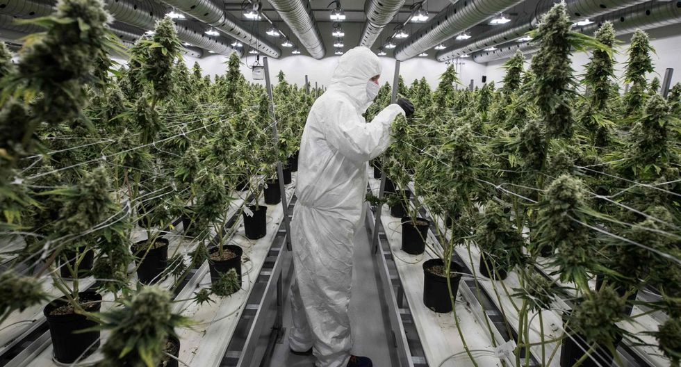 Canopy Growd. (Foto: AFP).