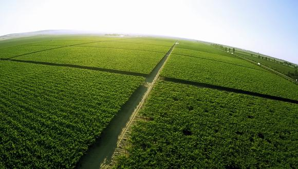 Cultivos sofisticados demandan grandes inversiones y, a la vez, mayores riesgos que pueden controlarse con el uso de tecnología. (Foto: Space AG)
