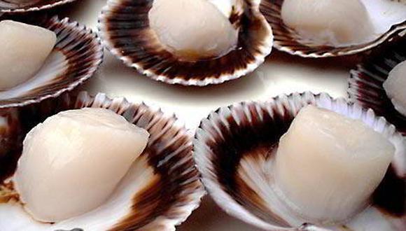 Crece la demanda de conchas de abanico en el mundo.