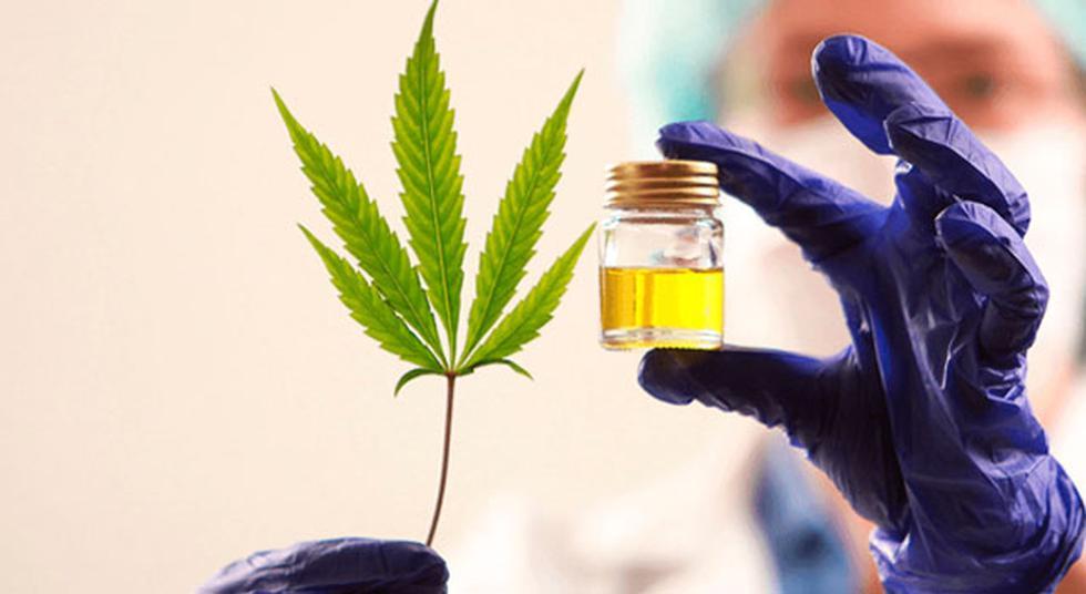 1. Creciente. Son startups y empresas que desarrollan tecnologías para el crecimiento o uniformación de un cultivo de cannabis. Ejemplos de estas tecnologías son luces de invernadero que controlan el crecimiento, fertilizantes y pesticidas orgánicos, y dispositivos que monitorean y controlan la humedad en invernaderos. (Foto: Difusión)