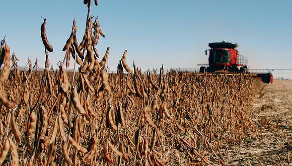 La Bolsa espera que la cosecha de maíz 2021-2022 sea de 55 millones de toneladas, mientras que la de soja alcanzará los 49 millones de toneladas.