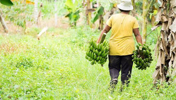 La ley cambia la estructura del actual Ministerio de Agricultura y Riego (Minagri). (Foto: Minagri)