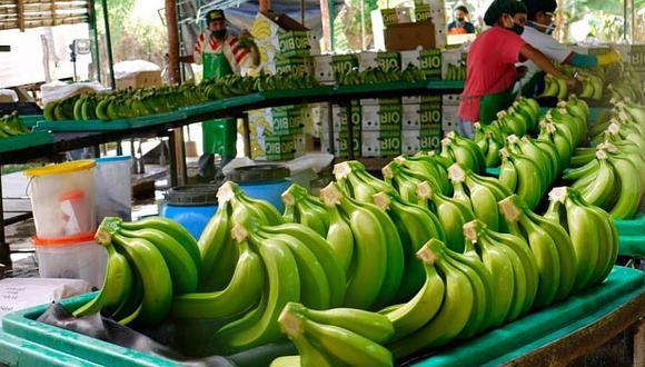 El clúster de banano apunta hacia el incremento de la productividad de las hectáreas.