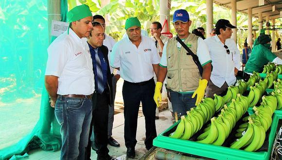 En Piura hay interés por introducir mejoras en la producción de banano orgánico.