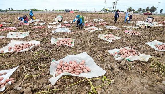 Con las compras públicas, quienes se dedican a la agricultura familiar obtendrían mejores precios por sus alimentos.  (Foto: Difusión).