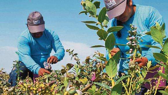 Envíos. Beta lidera en espárragos, es tercero en uvas y crece en arándanos. (Foto: Difusión)