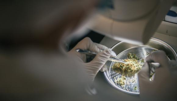 Hasta agosto había 7,267 pacientes en el Registro Nacional de Pacientes Usuarios del Cannabis y sus Derivados para uso medicinal y terapéutico. Esta cifra más que duplica a la registrada en enero pasado. (Foto: Canopy Growth)