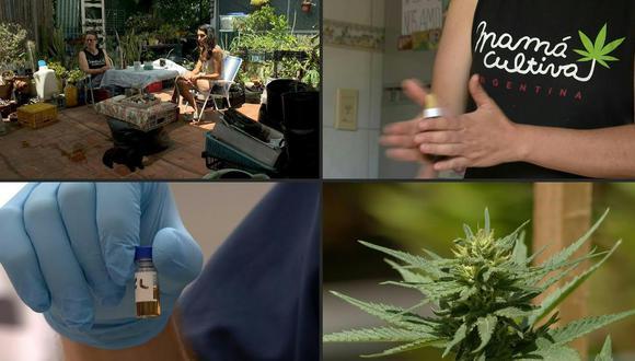 El mes pasado, el presidente Alberto Fernández (peronista de centroizquierda) legalizó por decreto el cultivo de marihuana para usos terapéuticos. (Foto: AFP)