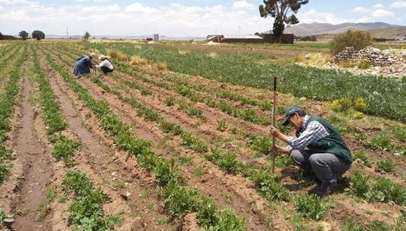 En el Perú la labor de la certificación de la producción orgánica se encuentra a cargo del Senasa.