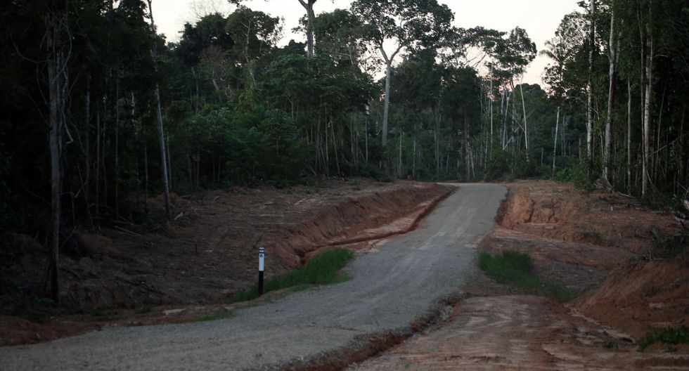 La Amazonía peruana perdió 154,766 hectáreas de bosques húmedos en el 2018. (Foto: GEC)