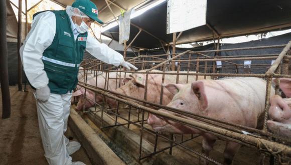 Perú adopta esta medida para revisar y actualizar los requisitos fitosanitarios de importación suscritos con el Servicio Nacional de Sanidad Agropecuaria e Inocuidad Alimentaria - SENASAG Bolivia,