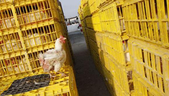 12 de julio del 2019. Hace 1 años - T Cae el precio mayorista del pollo, pero no a igual ritmo en mercados. En los últimos siete días del mes, el margen comercial entre el precio minorista y mayorista fue de 101%, según el Minagri.