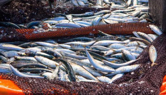 El mar del Perú alberga una gran variedad de vida marina y tiene la población de anchoveta más grande del mundo. (Foto: iStock)