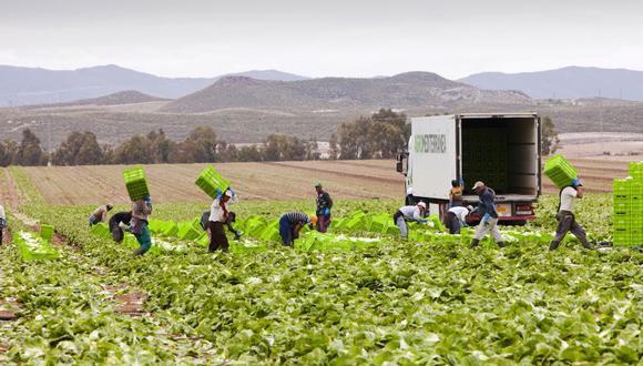 En mayo, los agricultores de varias regiones de Italia han incluso alquilado charters con sus propios medios para hacer venir trabajadores rumanos y marroquíes.