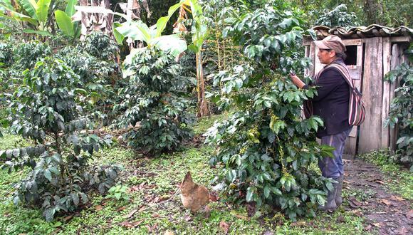 Daniel Rivera, gerente de ACCDER y representante de Root Capital en Perú, refirió que se ha revalorado la calidad del café orgánico peruano en el mundo.