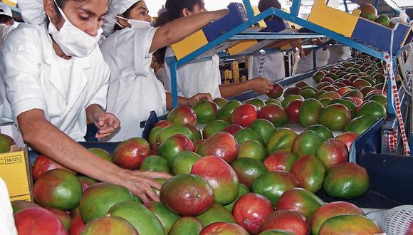 Mango. El clima le podría jugar una mala pasada a la campaña de mango