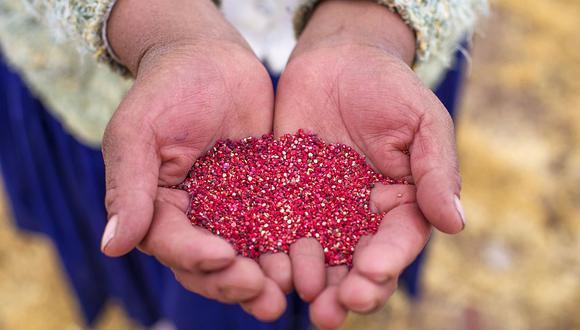 Más de 68 mil pequeños productores de zonas altoandinas se dedican al cultivo de la quinua, según el Midagri. (Foto: GEC)