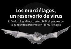 Los murciélagos, un reservorio de virus