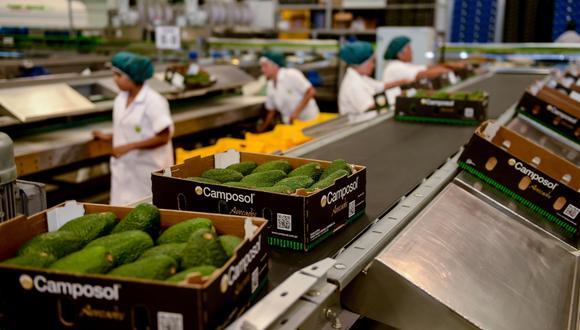 Exportaciones de palta crecerían a triple dígito este año. (Foto: Difusión)