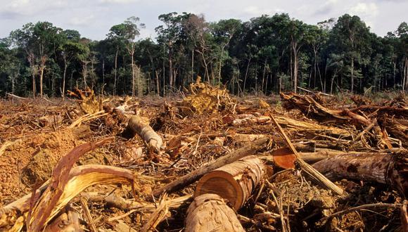 Las pérdidas en zonas tropicales en general contribuyeron con 2,600 millones de toneladas métricas de contaminación por dióxido de carbono, o el equivalente a las emisiones anuales de 570 millones de automóviles. (Foto: iStock)
