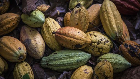 Cacao. (Foto: Bloomberg).
