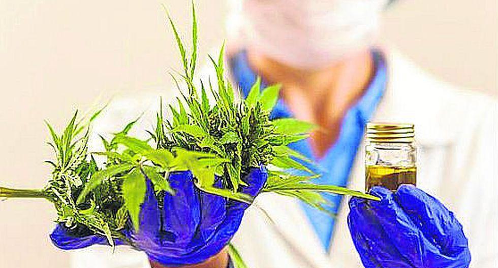 En la sociedad ecuatoriana, conservadora, aferrada a las tradiciones y fuerte convicción religiosa, cualquier cosa que sea vinculada a la marihuana sonaba como un pase directo al mundo de las drogas y las adicciones.