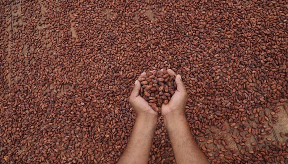 Cacao. (Foto: Difusión)