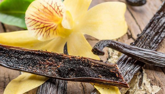 """""""El alto calor y la humedad del verano y la estación seca con temperaturas más frescas en el invierno son adecuadas para cultivar vainilla y otras plantas sensibles al frío"""", matizó Chambers. (Foto: iStock)"""
