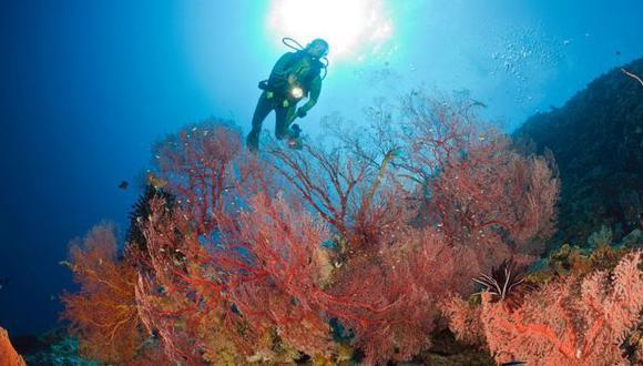 Los arrecifes de coral son uno de los barómetros del cambio climático más visibles y sensibles del mundo. La mayoría de las secciones de la Gran Barrera se ha visto afectada por tres eventos de blanqueamiento masivo desde 2015.  (Foto: GETTY )