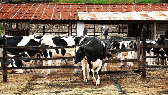 El paro de transportistas también ha detenido el suministro de los ganaderos. (Foto: GEC)