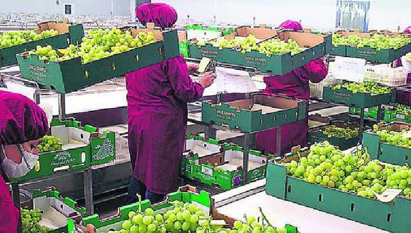 Los pequeños productores necesitan mejorar su capacidad logística para exportar.