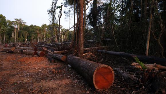 La adscripción del Osinfor al Ministerio del Ambiente busca combatir la tala ilegal, sostuvo el ministro Raúl Pérez-Reyes. (Foto: GEC)