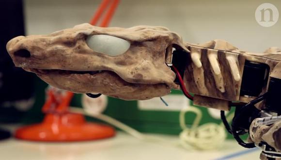 Descubrieron que el movimiento del Orobates pabsti debía ser bastante paralelo al suelo, una mezcla del movimiento de los lagartos y los cocodrilos actuales, sin ser ni lo uno ni lo otro.