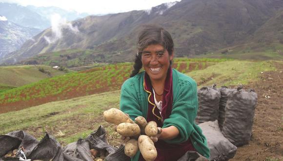 En los últimos años el sector de papas amarillas y nativas en América del Sur ha cobrado relevancia, debido al valor agregado que se le ha dado a nivel local e internacional. (Foto: CIP)