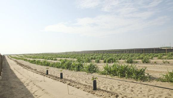 El proyecto de irrigación contempla una extensión de 38,500 hectáreas, que han sido vendidas a empresas agroexportadoras.  (Foto: USI)