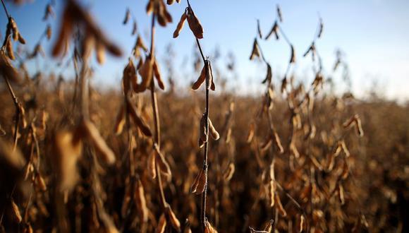 """""""En los últimos 35 años, hubo 3 campañas con Niñas consecutivas: fueron 3 de las peores campañas de soja y maíz de Argentina"""", advirtió la entidad. (Foto: Reuters)"""