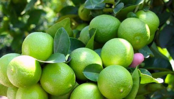 Piura concentra la mayor producción de limón del país. (Foto: Minagri)