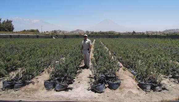 La gran mayoría de hectáreas de agroexportación se ubica en la costa. (Foto: difusión).