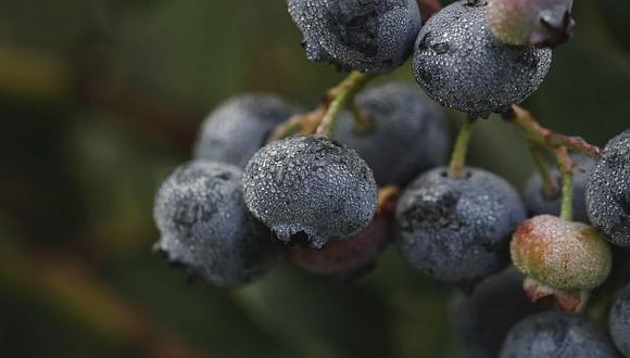 Las principales empresas exportadoras en la temporada 2020-21 fueron Camposol, Hortifrut Perú, Hortifrut TAL SAC, Agrovisión Perú y Complejo Agroindustrial Beta.