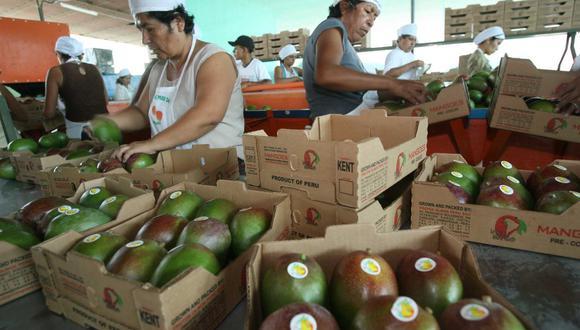 Piura concentra el 80% de la producción peruana de mango. Le siguen en volumen La Libertad, Lambayeque e Ica.