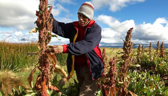 Uno de los productos beneficiados será la quinua. (Foto: SPDA)