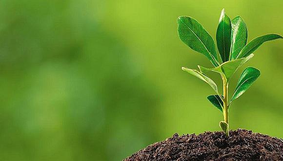 Día de la Tierra: ¿Cómo disminuir el impacto ambiental de una empresa?