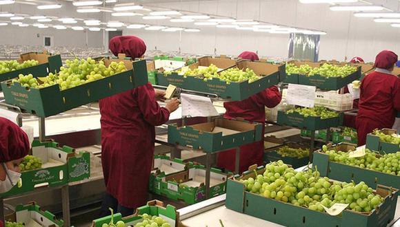 La exportación de uva superó las 400,000 toneladas durante la campaña 2020-2021. (Foto: GEC)