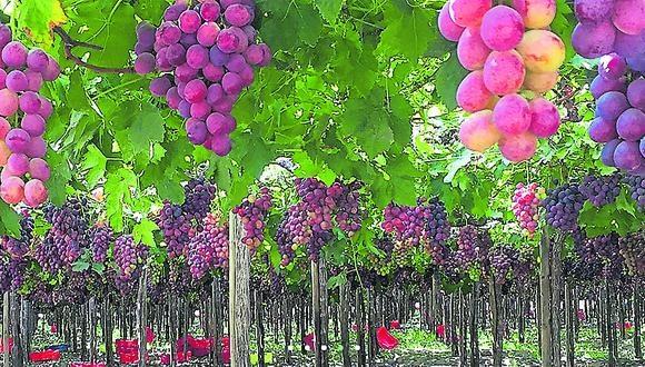 Prospectiva. Cerro Prieto ya prepara inicio de campaña de espárragos en junio, arándanos a partir de julio y uvas en el mes de octubre. (Foto: Difusión)
