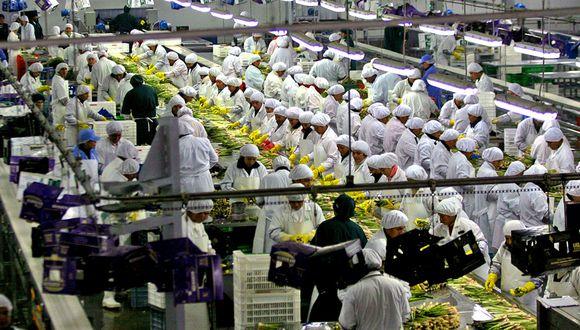 Las colocaciones de uvas frescas alcanzaron US$ 304 millones. (Foto: Andina)