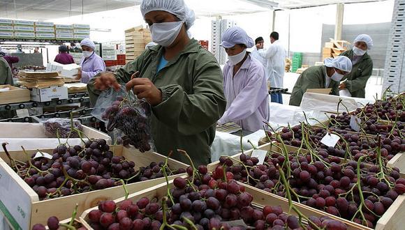 Las exportaciones de uva crecieron más de 20% el año pasado. (Foto: difusión).