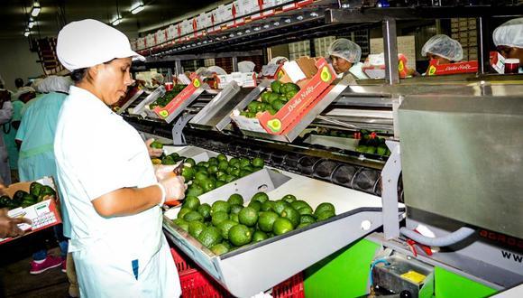 Paltas. Su precio alcanzó los US$ 2.28 por kilo en abril. (Foto: Adex)